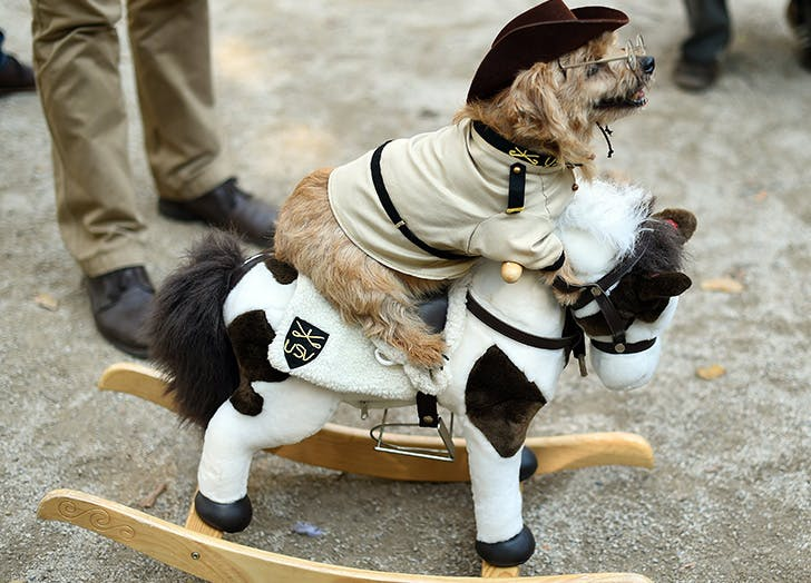 Teddy-Roosevelt-Halloween-dog-costume