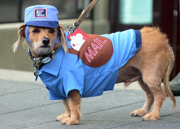 Mailman-Halloween-dog-costume
