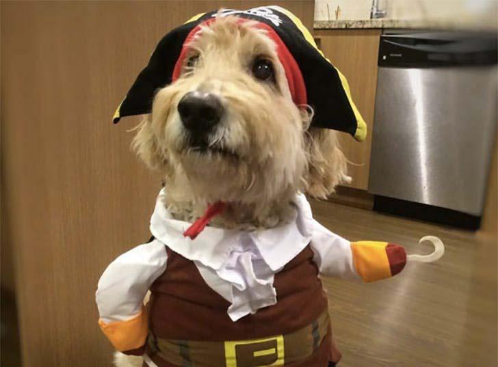 Pirate-Halloween-dog