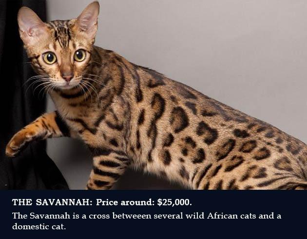 2. Savannah