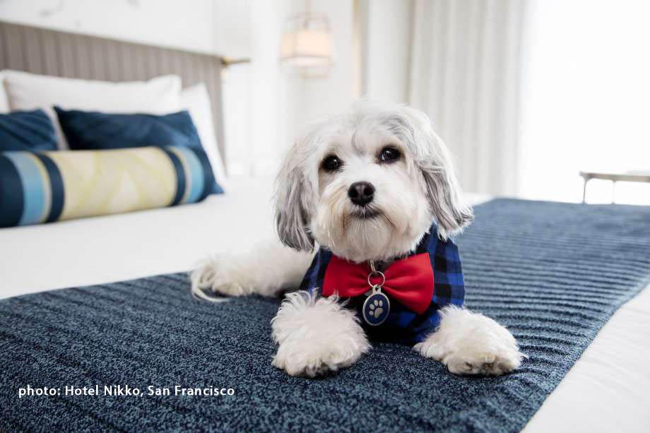 hotel dog 2